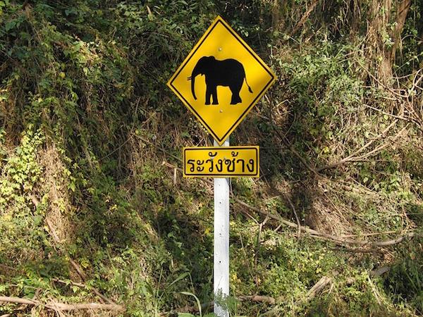 elephant-666001_640